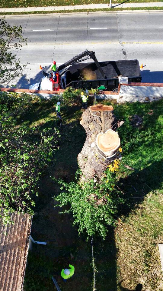 kansas city tree removal