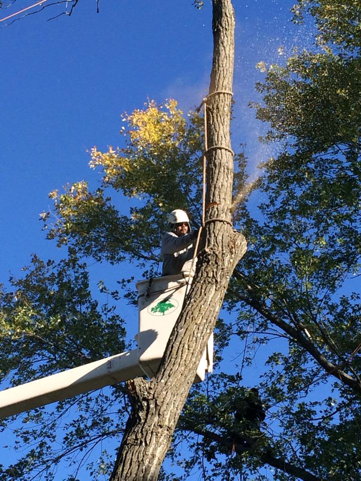 tree removal services kansas city