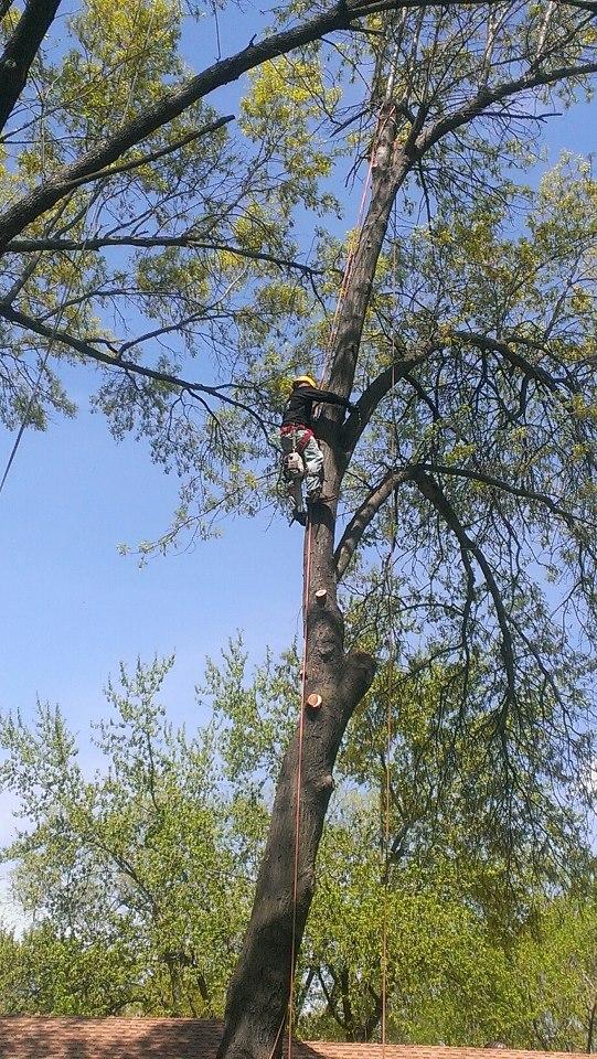 kansas city tree services