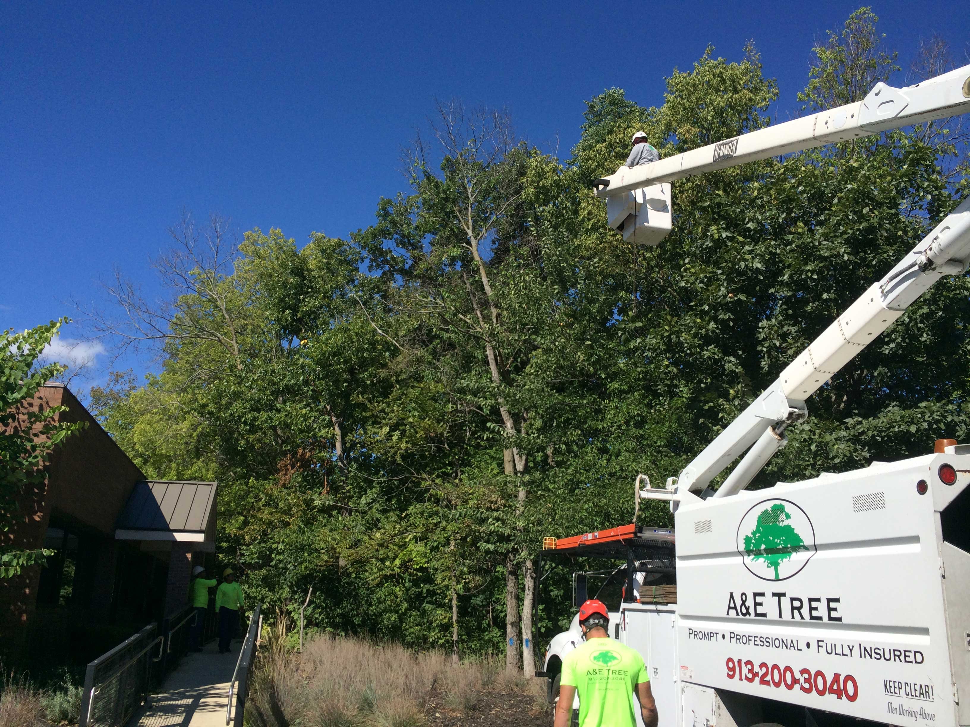Kansas City Tree services