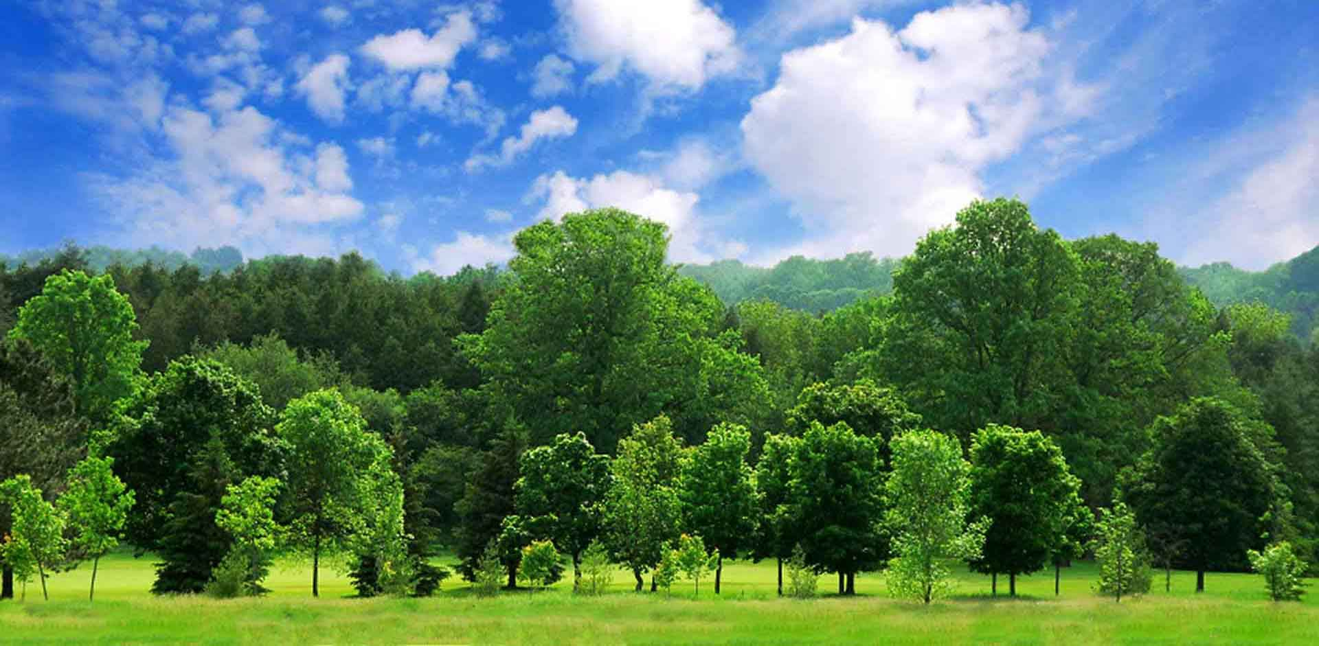 Tree Trimming contractors kansas city