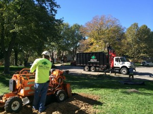 stump removal kansas city