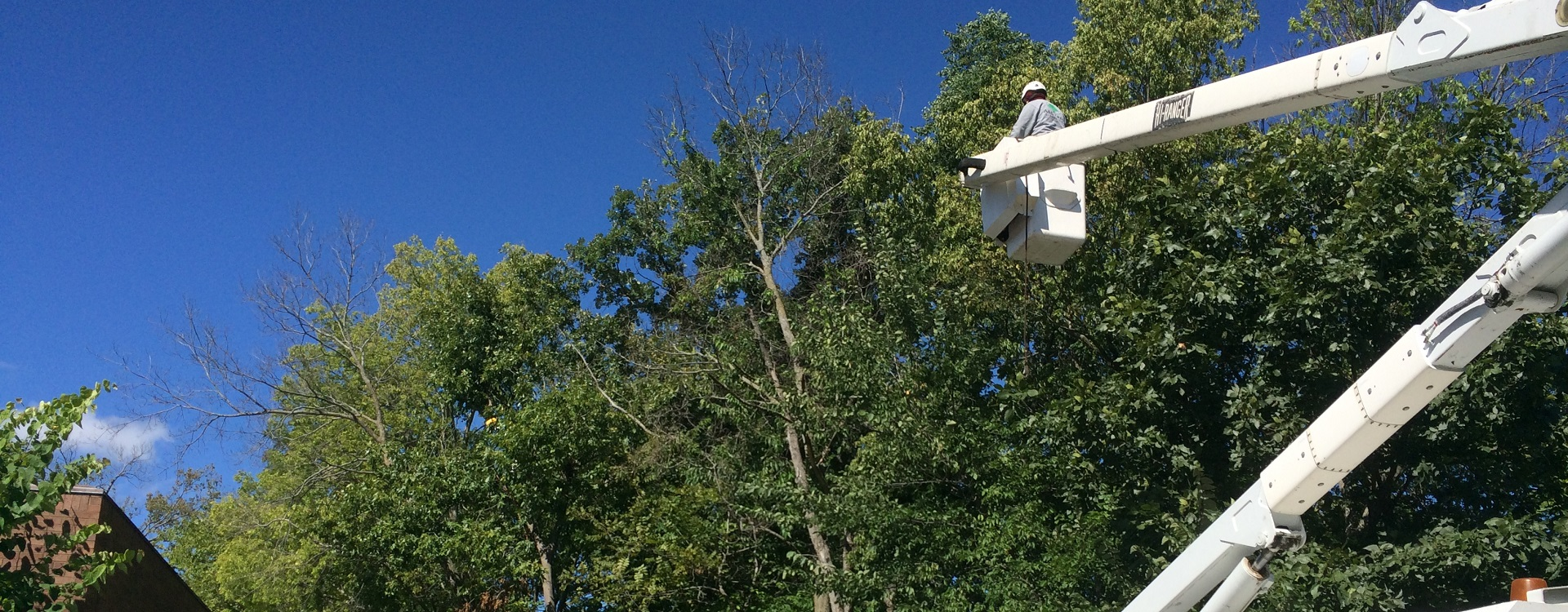 tree service contractors