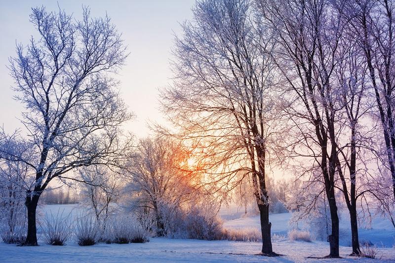 Winter Tree Trimming Kansas City